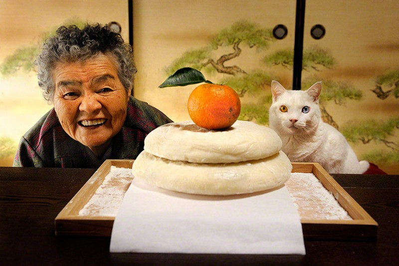 affecting-heart-warming-grandmother-and-odd-eyed-cat-photos