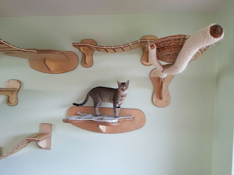 cats-fun-entertaining-play-playgrounds-in-home (1)