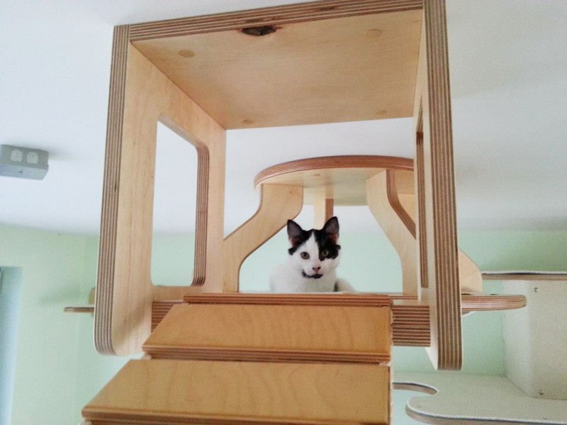 cats-fun-entertaining-play-playgrounds-in-home (5)