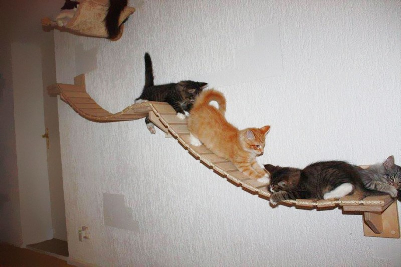 cats-fun-entertaining-play-playgrounds-in-home (8)
