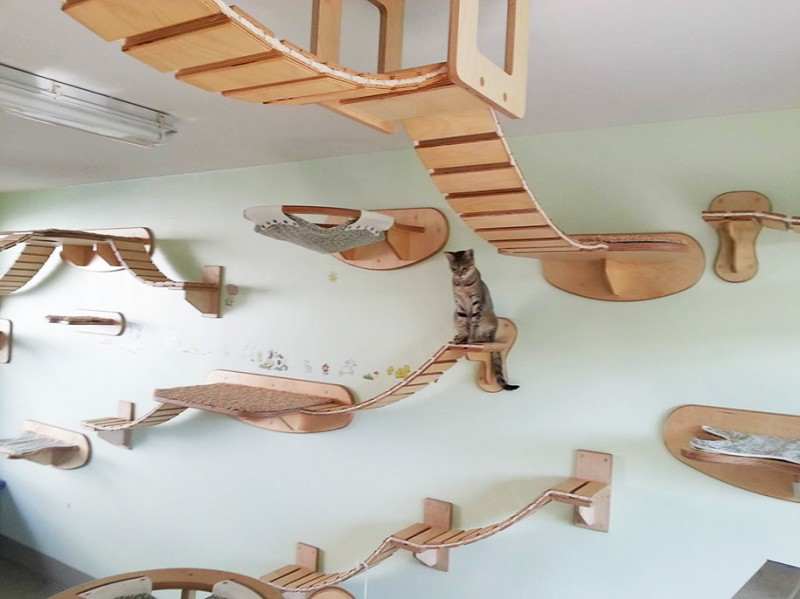 cats-fun-entertaining-play-playgrounds-in-home