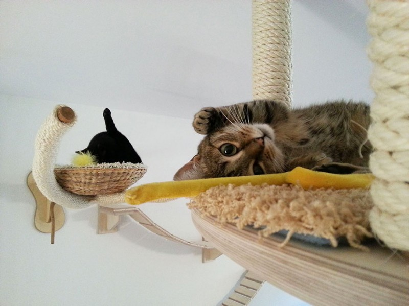 cats-fun-entertaining-play-playgrounds-in-home (9)