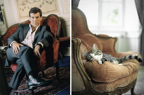 funny-hilarious-celebrities-male-stars-and-cats-pictures (24)