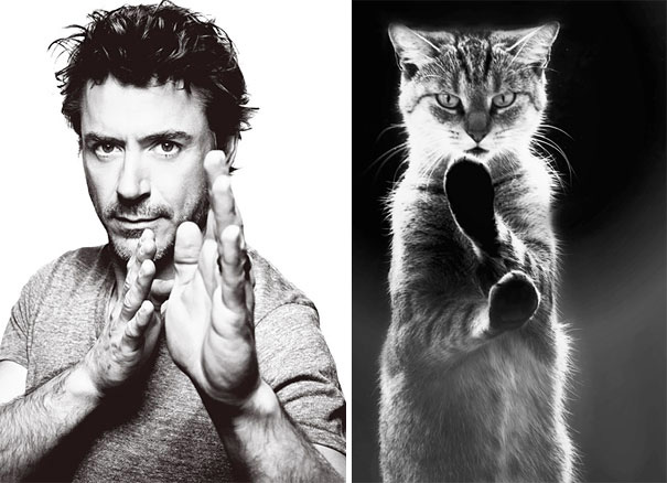 funny-hilarious-celebrities-male-stars-and-cats-pictures (8)