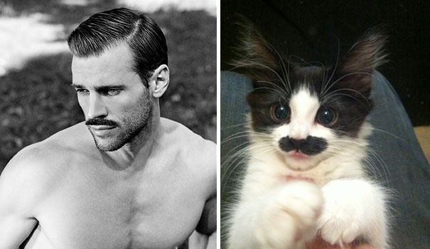 funny-hilarious-celebrities-male-stars-and-cats-pictures