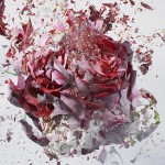 high-speed-photography-flowers-bursting-pictures (2)