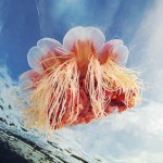 Underwater Experiments – Beautiful and mysterious photos of jellyfish