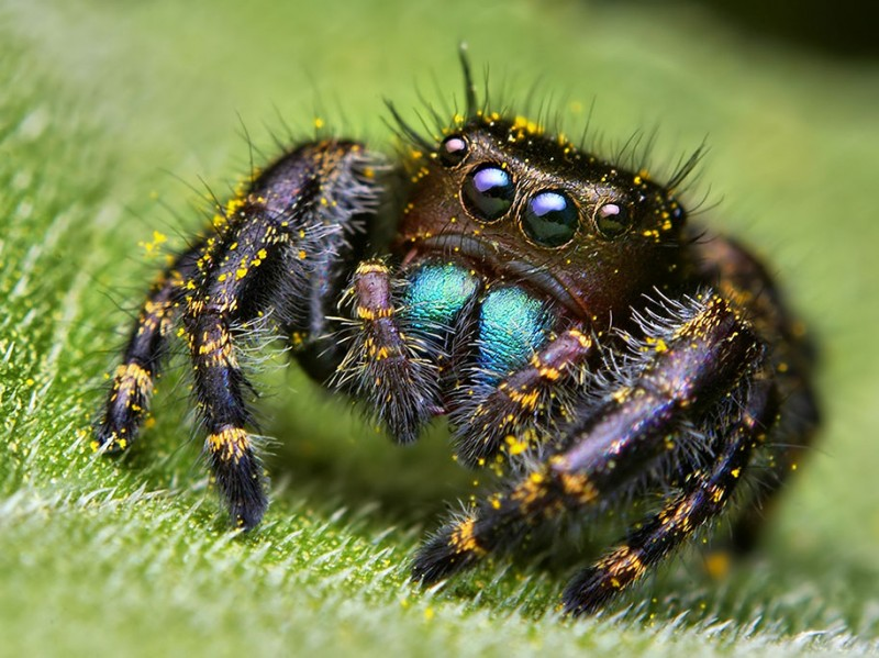impressive-cool-macro-photography-spiders-close-up-pictures (1)