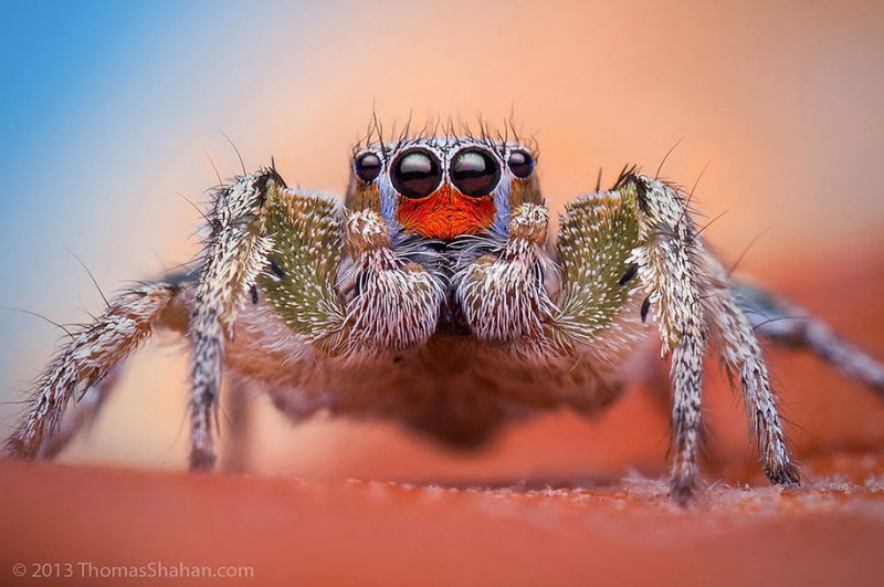 impressive-cool-macro-photography-spiders-close-up-pictures (10)