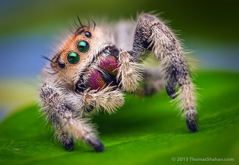impressive-cool-macro-photography-spiders-close-up-pictures (11)
