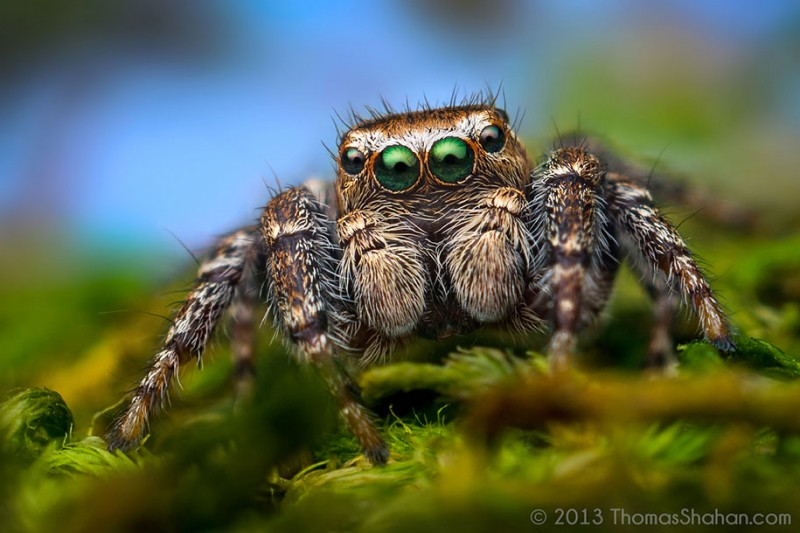 impressive-cool-macro-photography-spiders-close-up-pictures (12)