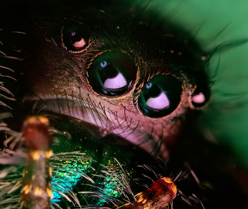 impressive-cool-macro-photography-spiders-close-up-pictures (13)