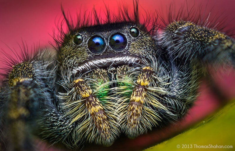 impressive-cool-macro-photography-spiders-close-up-pictures (14)