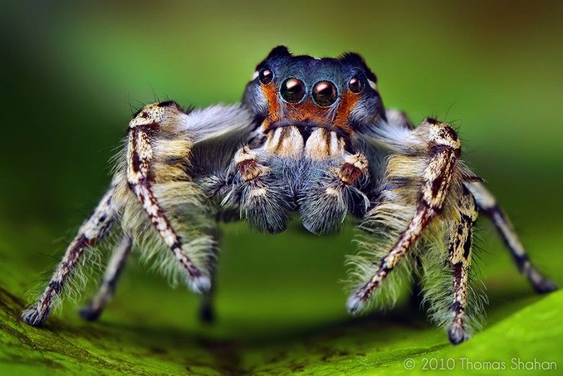 impressive-cool-macro-photography-spiders-close-up-pictures (15)