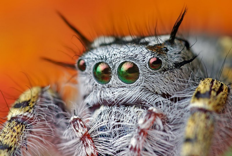 impressive-cool-macro-photography-spiders-close-up-pictures (16)