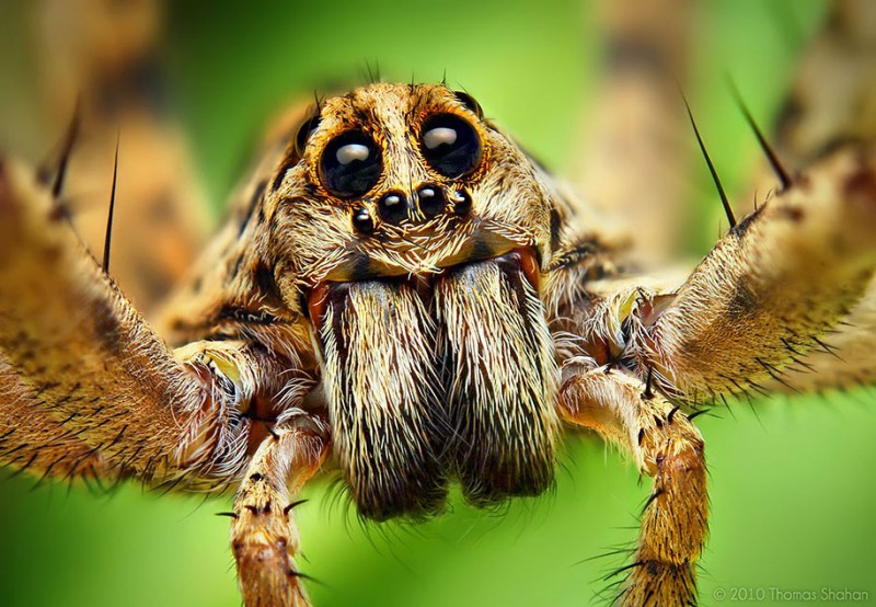 impressive-cool-macro-photography-spiders-close-up-pictures (17)