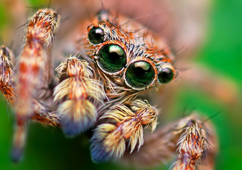 impressive-cool-macro-photography-spiders-close-up-pictures (2)