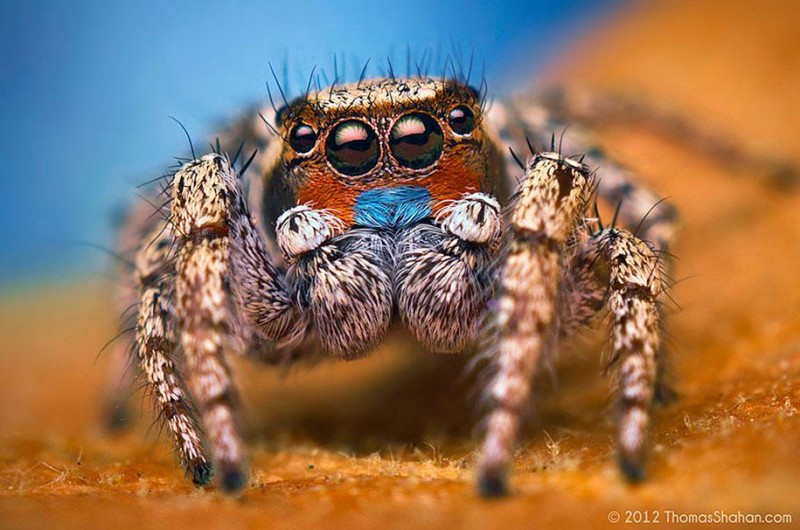 impressive-cool-macro-photography-spiders-close-up-pictures (3)