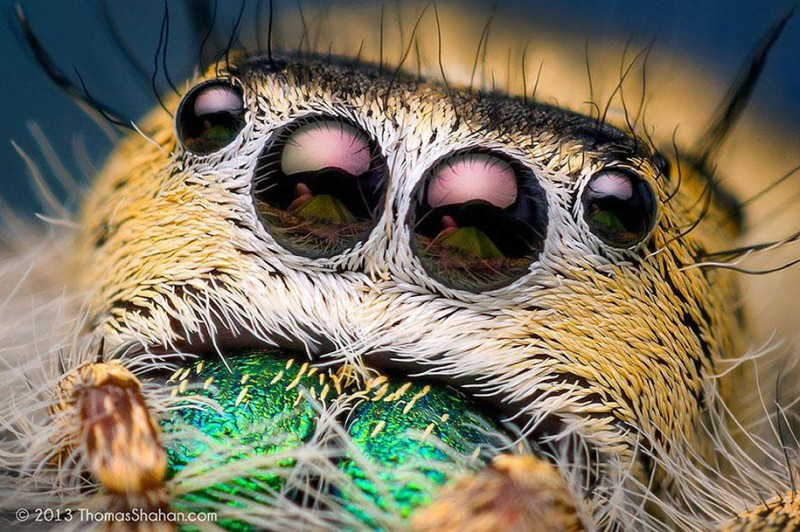 impressive-cool-macro-photography-spiders-close-up-pictures (4)