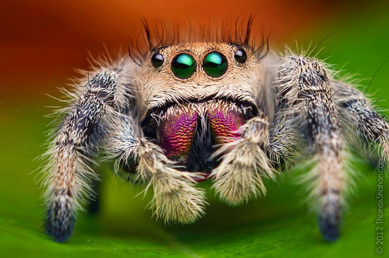 impressive-cool-macro-photography-spiders-close-up-pictures (5)