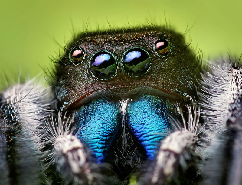impressive-cool-macro-photography-spiders-close-up-pictures (6)