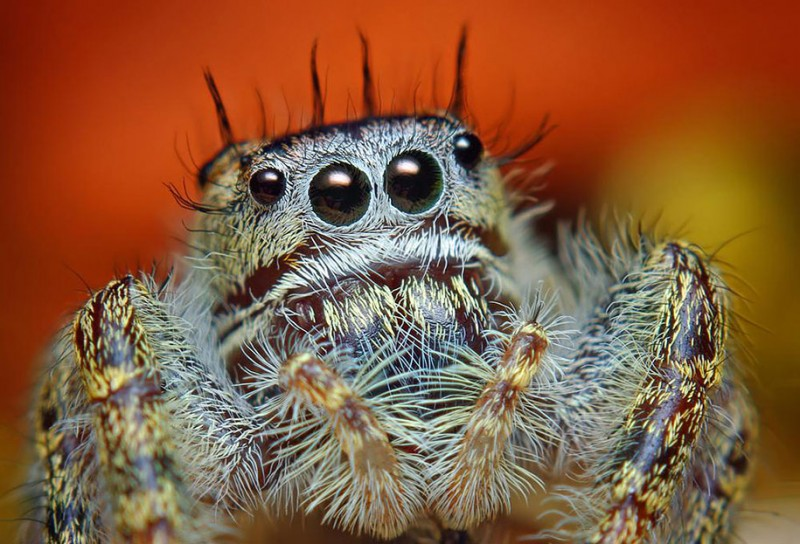 impressive-cool-macro-photography-spiders-close-up-pictures (7)