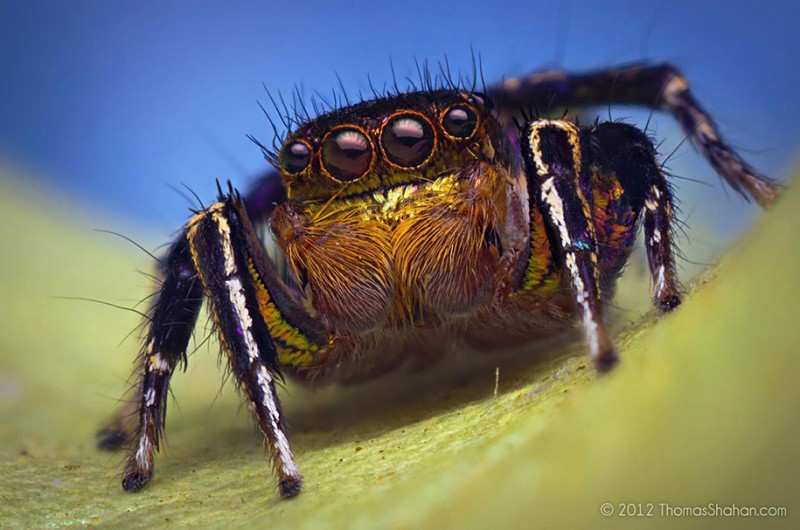impressive-cool-macro-photography-spiders-close-up-pictures (8)