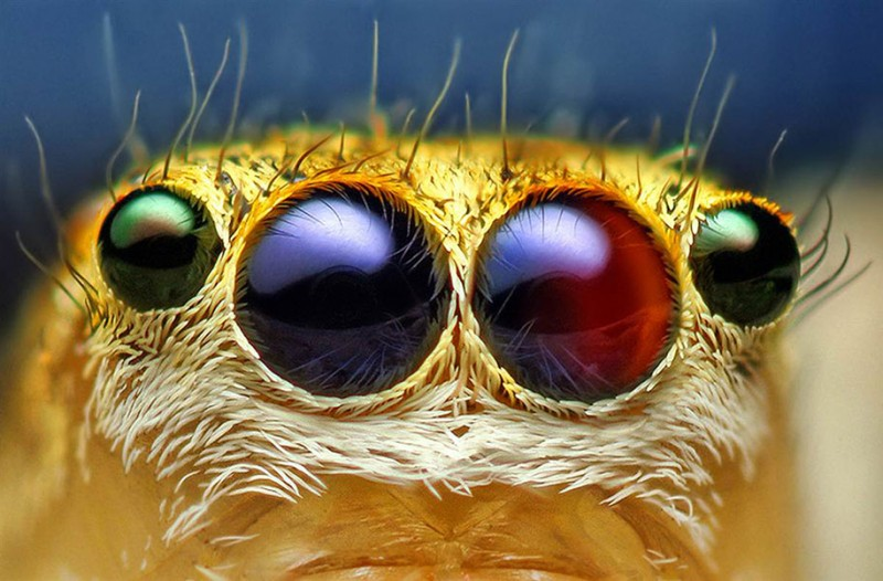 impressive-cool-macro-photography-spiders-close-up-pictures