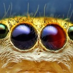 Amazing visual art by macro photography – Close-ups of jumping spiders
