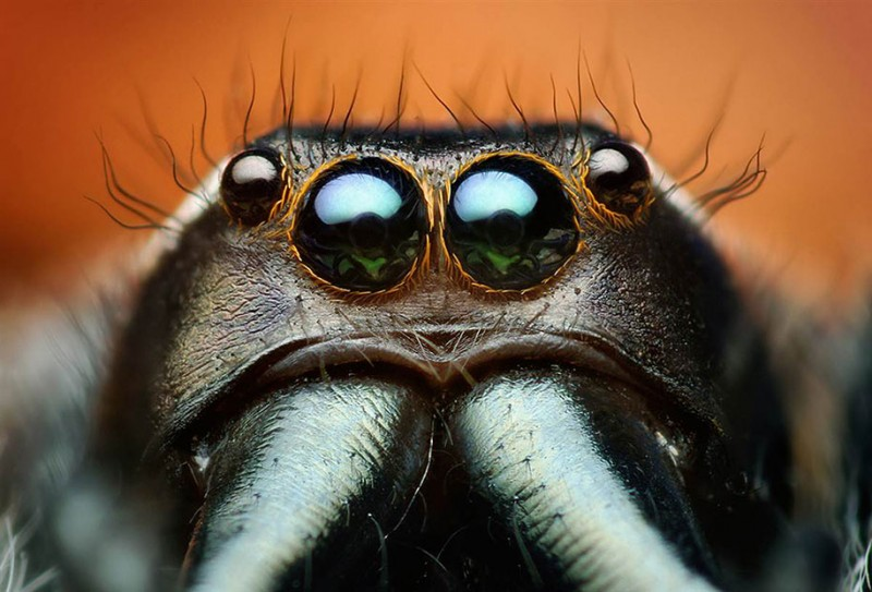 impressive-cool-macro-photography-spiders-close-up-pictures (9)