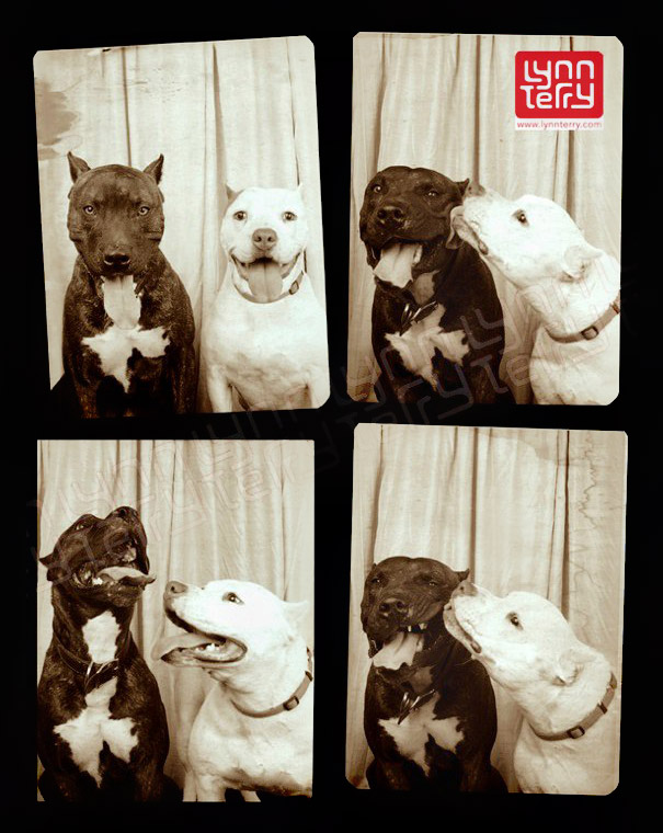 adorable-cute-funny-dogs-pictures-in-photo-booth (1)