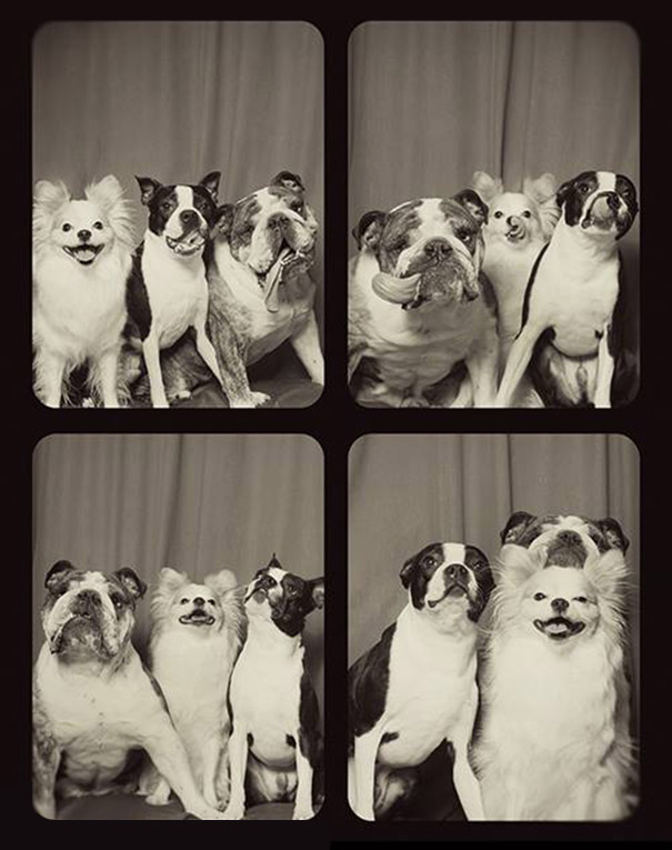adorable-cute-funny-dogs-pictures-in-photo-booth (2)