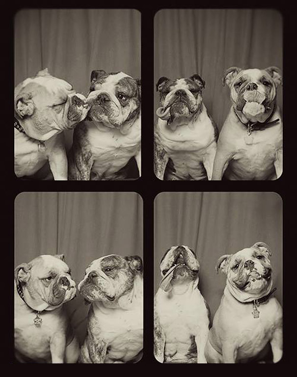 adorable-cute-funny-dogs-pictures-in-photo-booth (3)