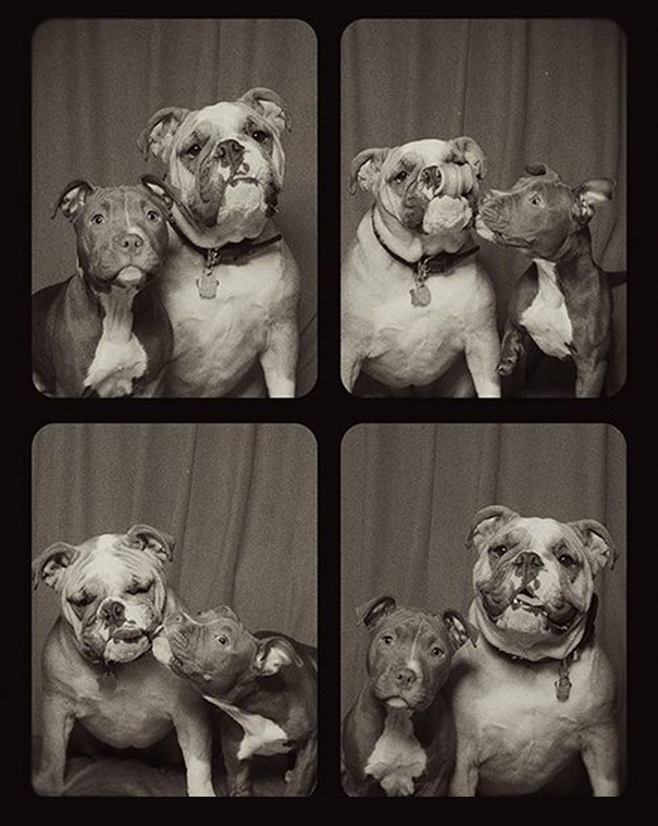adorable-cute-funny-dogs-pictures-in-photo-booth (5)