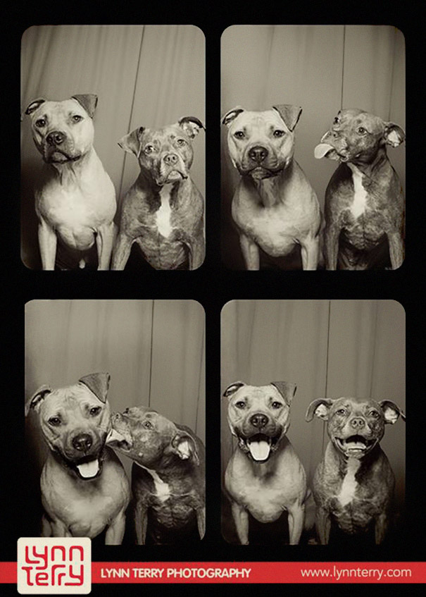 adorable-cute-funny-dogs-pictures-in-photo-booth