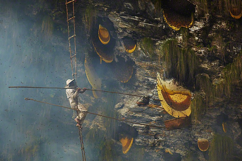 amazing-Nepal-Himalayan-traditional-honey-hunting-skills-photography (1)