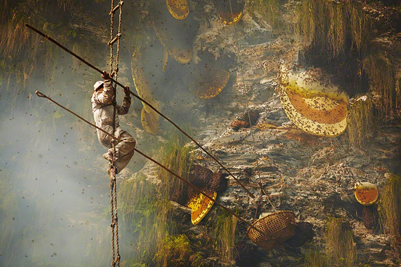amazing-Nepal-Himalayan-traditional-honey-hunting-skills-photography