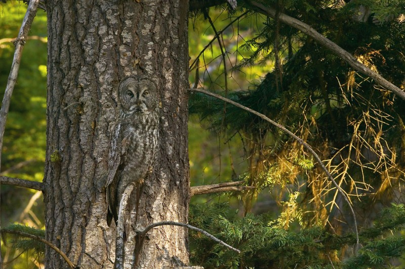 amazing-wildlife-photography-incredible-animal-camouflage
