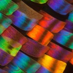 Macro photographs of the wings of butterflies and moths