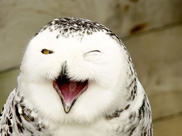 cute-funny-smiling-animals-pictures (15)