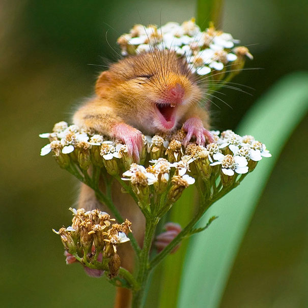 cute-funny-smiling-animals-pictures (27)