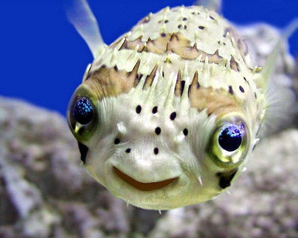 cute-funny-smiling-animals-pictures
