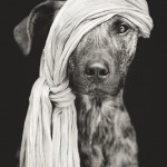 Photographer takes pictures of his playful and beloved dogs