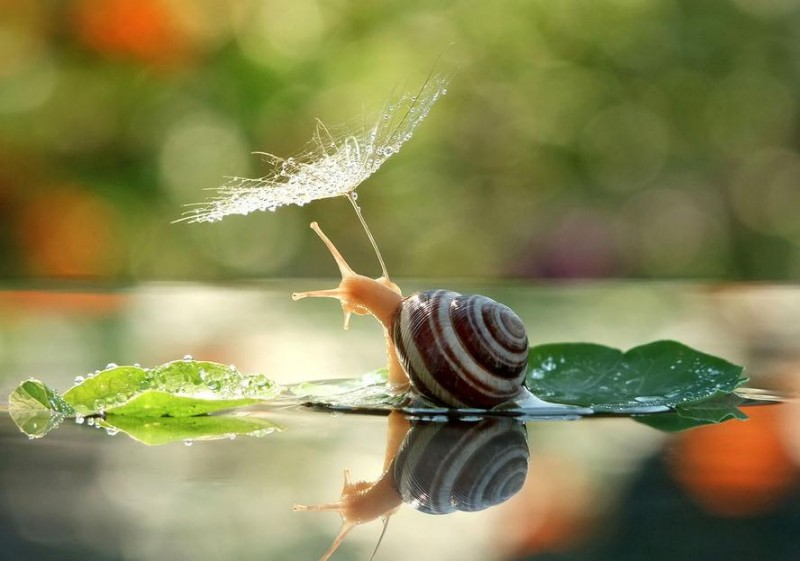 Beautiful Photography Part - 16: Wondrous-beautiful-macro-photography-snails-pictures (1)