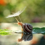 Fascinating macro photographs of snails' world