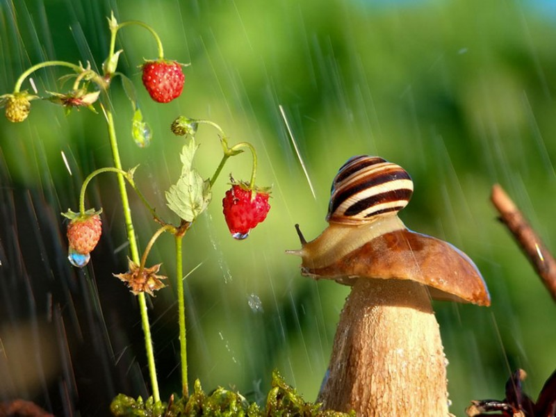 wondrous-beautiful-macro-photography-snails-pictures (10)