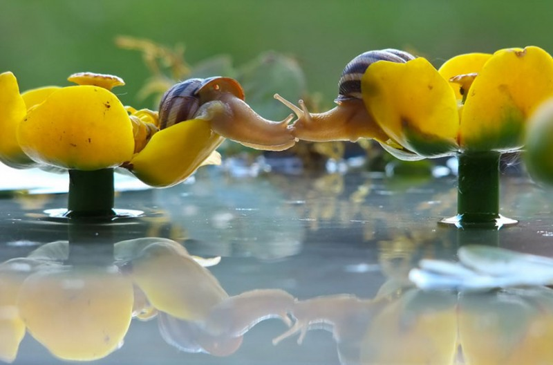wondrous-beautiful-macro-photography-snails-pictures (11)