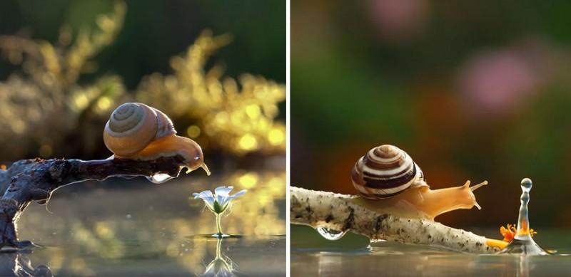wondrous-beautiful-macro-photography-snails-pictures (3)