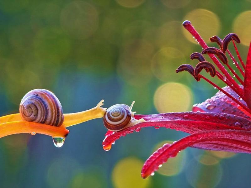 wondrous-beautiful-macro-photography-snails-pictures (4)