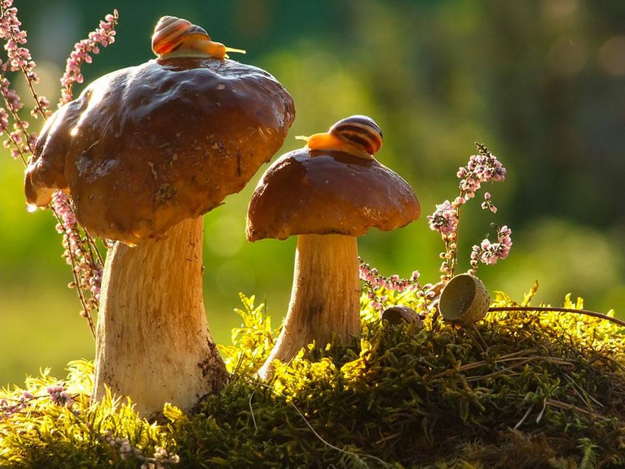 Fascinating Macro Photographs Of Snails' World